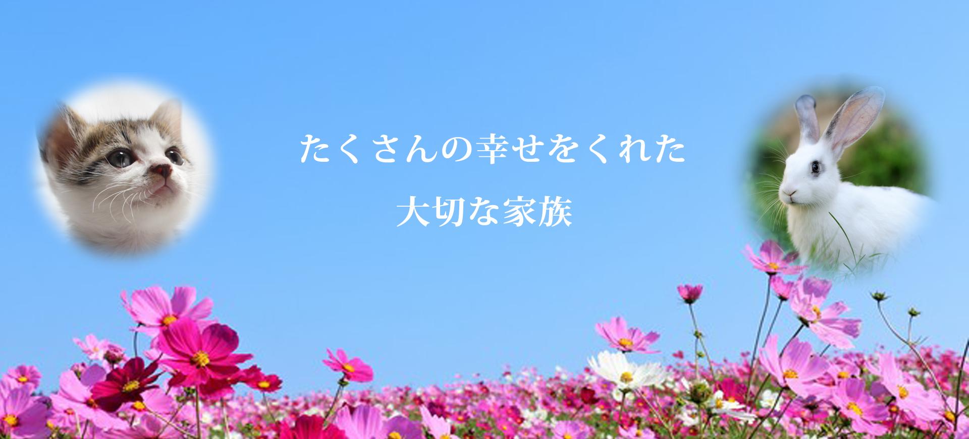 Slide image 1